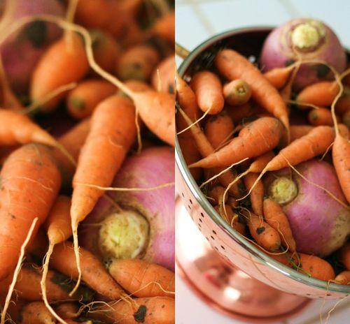 Carrots_'n_turnips