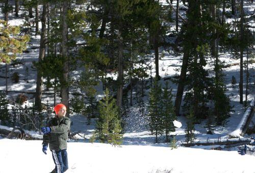Sibley snow_3